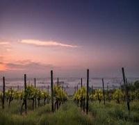 Vineyard Light farms